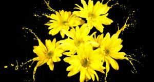 מיכאל לייטמן - טבע פרחים