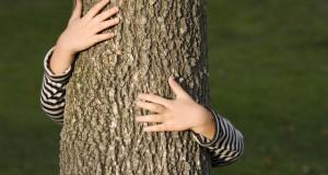 הרב לייטמן - אישה מחבקת עץ בשדה