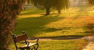 חכמת הקבלה - פארק ספסל עצים שקיעה