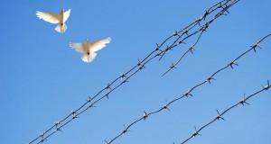מיכאל לייטמן - שלום ומלחמה גדר תיל יונה ציפור