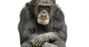 חכמת הקבלה - קוף