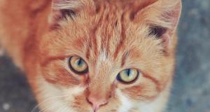 חכמת הקבלה - חתול