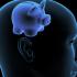 חכמת הקבלה - מוח מחשבה חזיר איש