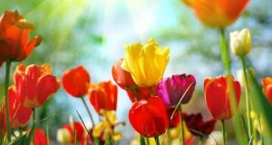 מיכאל לייטמן - פרחים