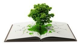 הרב לייטמן - ספר ועץ