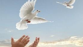 מיכאל לייטמן - יונה שלום ידיים שמיים ציפור