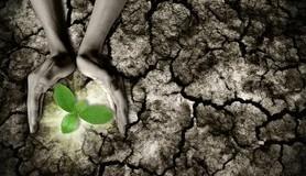 מיכאל לייטמן - אדמה יבשה צמח ידיים