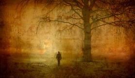 מיכאל לייטמן - יער איש עץ בודד