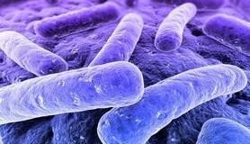 הרב לייטמן - חיידק מעבדה וירוס מדע מחקר