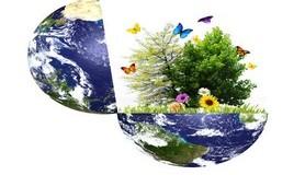 הרב לייטמן - עולם פרחים צומח צמח
