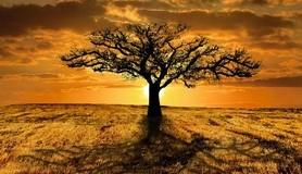 חכמת הקבלה - עץ מדבר