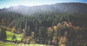 טבע ירוק