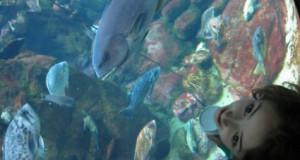 אקווריום דג אישה