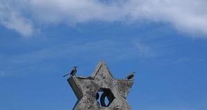 ציפור מגן דוד